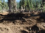 uprooted trees and disturbed soil due to logging on pct