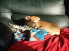 dog sleeping on sofa in sun